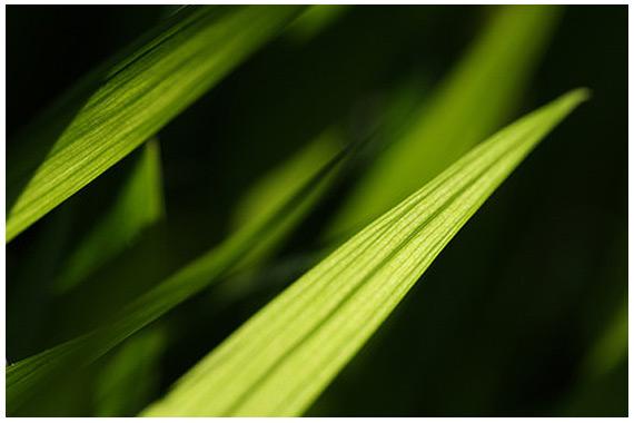 foto_projekte-licht-garten-01_garten